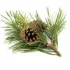 Lotiune pentru masaj, cu plante BIO, Life Care®